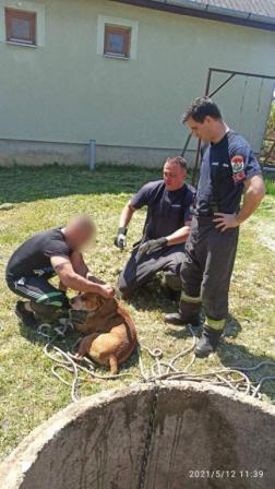 A tűzoltók átadták a gazdájának a kutyát.