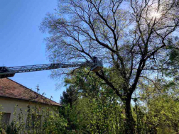 Megdőlt, veszélyt jelentő fát távolítottak el a tűzoltók a nyíregyházi Bojtár utcában